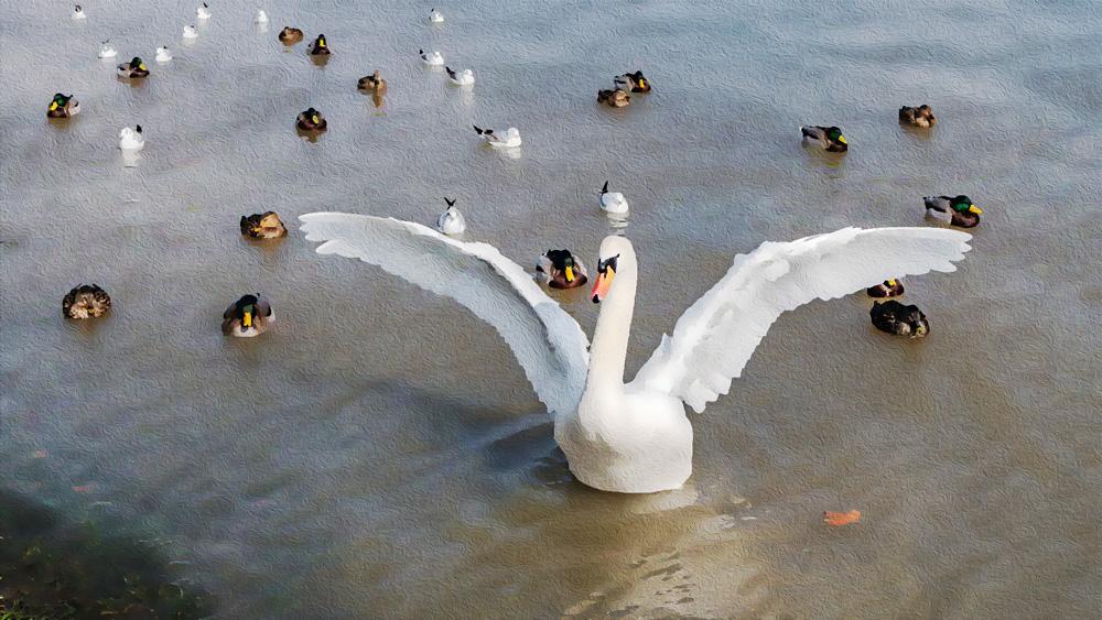 Photoshopを使った【超簡単】リアルタッチ絵画加工(白鳥の写真油絵)