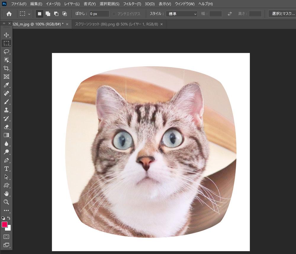 激かわ!Photoshopで鼻デカアニマル写真を作る!【魚眼レンズ】